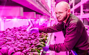 City farms that grow with LED lighting