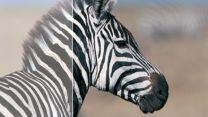 Динамическая контрастность 50000:1 для невероятно насыщенных оттенков черного