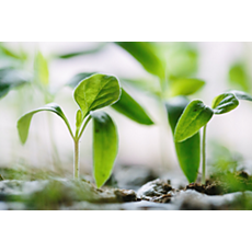 ECC0/09603 Sustainability Compensation carbone