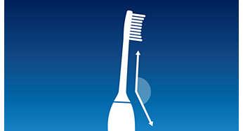 Tête de brosse courbée pour un meilleur accès aux dents du fond