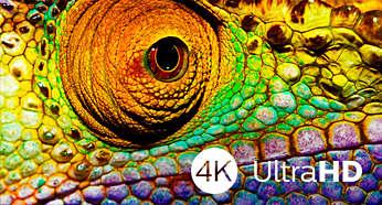 La belleza de la TV Ultra HD 4K se disfruta en todos los detalles