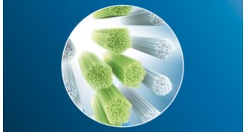 Philips Sonicare C3 Premium Plaque Control Standard Toothbrush Variety Pack