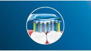 Premium Plaque Defense brush head flexes along your gum line