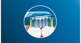 AdaptiveClean brush head flexes along your gum line